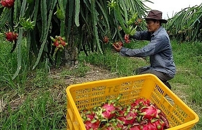 US continues to be key export market for Vietnam