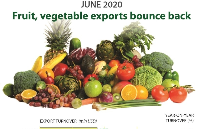 Fruit, vegetable exports bounce back (Infographics)