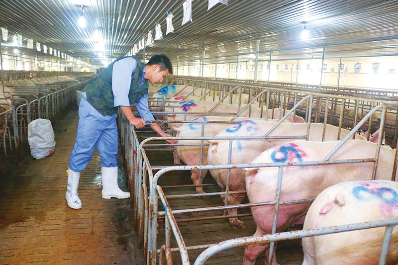 1502p13 sky high livestock prices may breach competition law