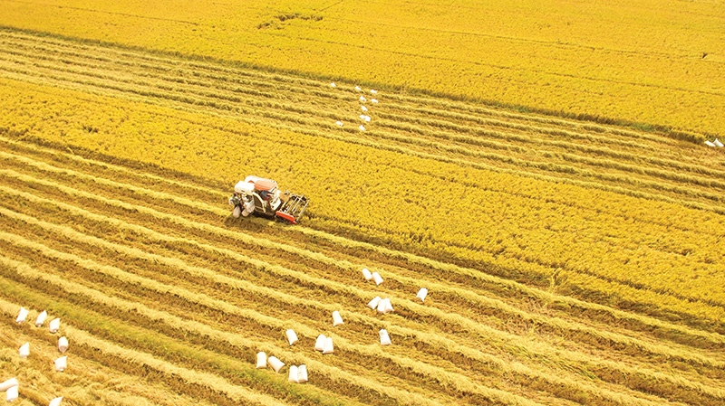 The total export turnover of the agricultural sector in the first six months of 2021 exceeded the set plan, photo VNA