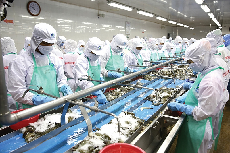 Vietnam's shrimp exports will benefit greatly from the UVFTA, which will bolster bilateral trade, Photo Le Toan