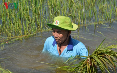 Nearly 70ha of crop inundated in An Giang