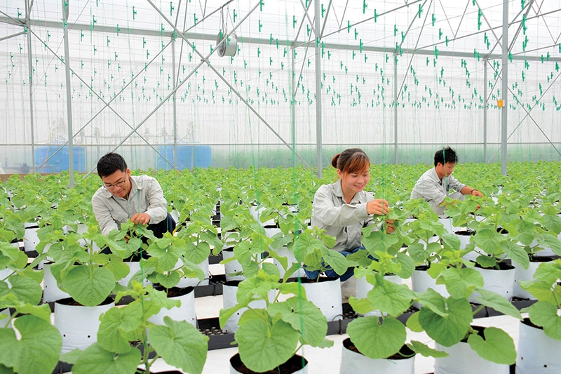 vietnamese agriculture strengthened by ma