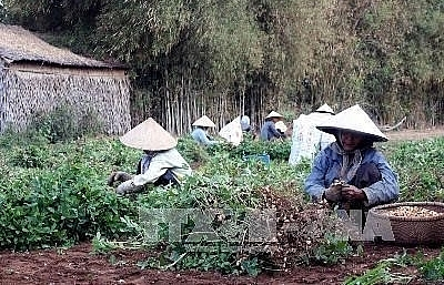 Project helps create sustainable livelihood for farmers in Tra Vinh