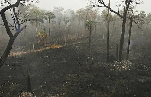 bolivia lost 12 million hectares to fires this year government