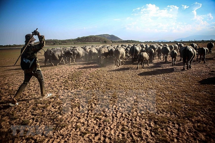 central vietnam province hit by severe drought