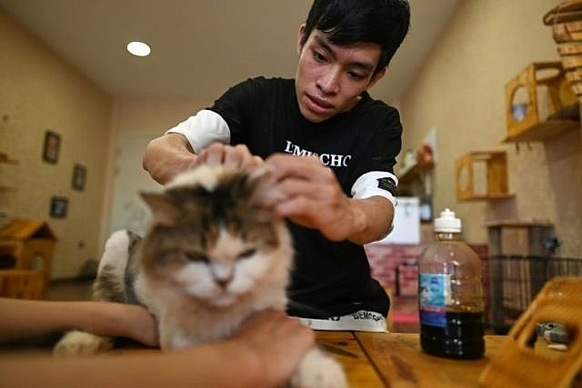 cat cafe offers purr fect pick me up for rescued felines