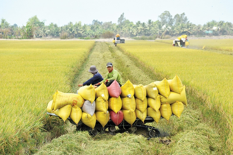 Labour shortages are threatening quality of products and viability of the companies themselves, Photo: Le Toan