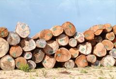 Vietnam denies illegal timber trade with Laos