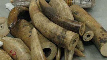 USAID seminar updates wildlife protection measures