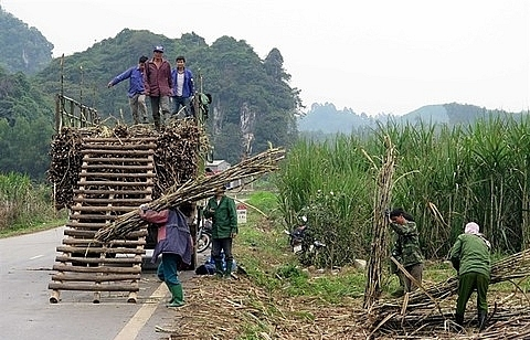 MoIT to auction duty quota for sugar import