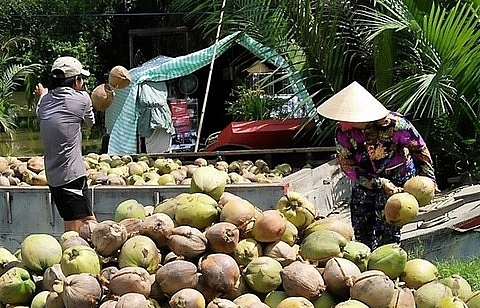 ben tre promotes investments in agriculture