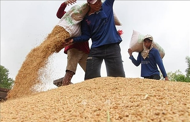 Rice industry must diversify products: experts