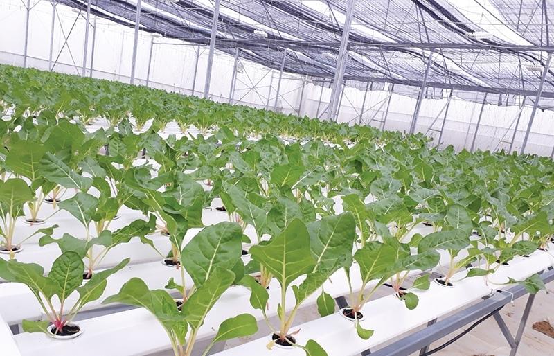 Phu Yen to rise as high-tech agriculture hub