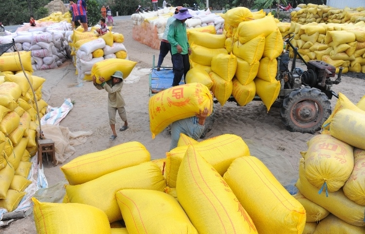 Rice exporters feel strain of restrictions