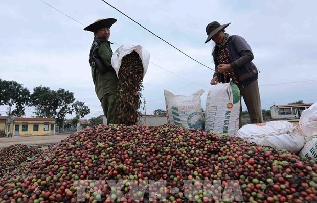 Vietnam's coffee exports to RoK likely to increase