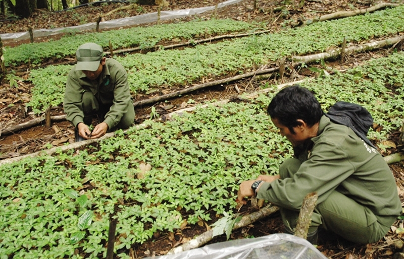 kon tum spurs high tech agriculture development
