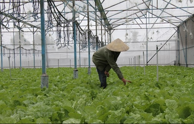 Dak Lak farmers to benefit from UN climate change response project
