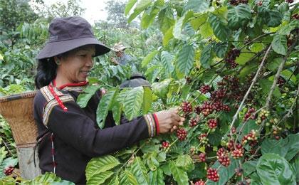 VinaCapital buys into ThaiHoa