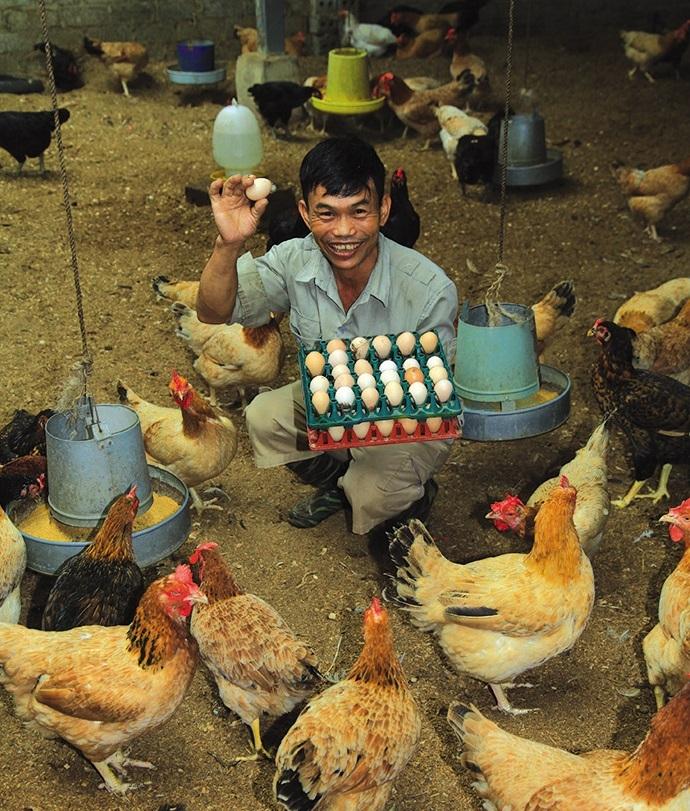 tackling food risks organically