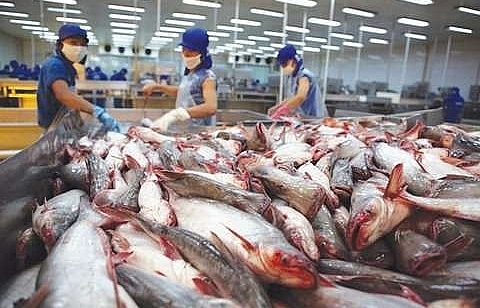 vasep vietnam tra producers should plan to face china farming