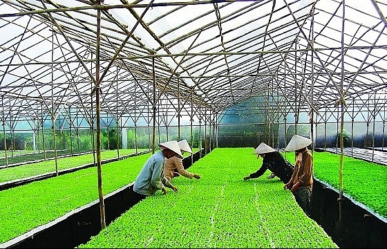 Festival featuring Hanoi's agricultural products, craft villages to open