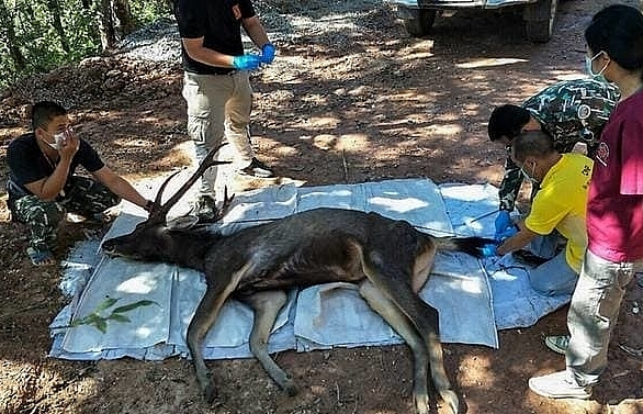Dead deer found in Thailand with 7kg of plastic in stomach
