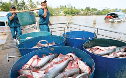 WWF tra fish claims just a red herring