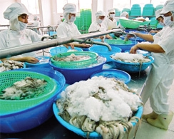 Seafood export's bountiful catch
