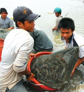 Investment confab   set for Mekong Delta