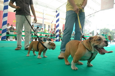 Five competitions in Vietnam Dog Show 2012