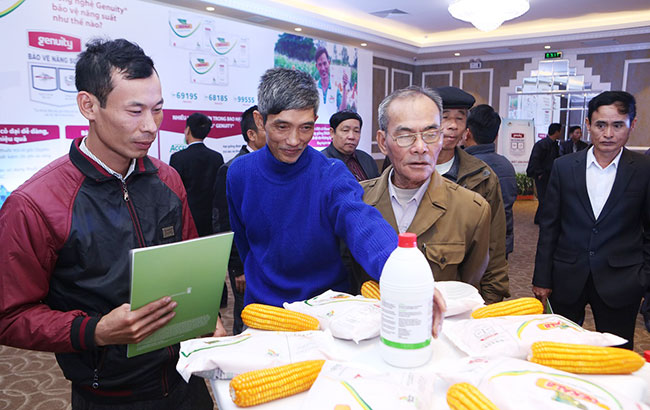Monsanto subsidiary launches Genuity corn seeds in Vietnam