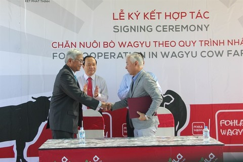 VN, Japanese firms cooperate in Waguy cow farming