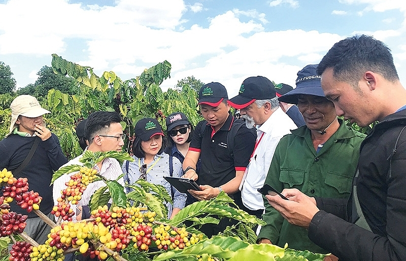 Nestlé creating blueprint for quality coffee development