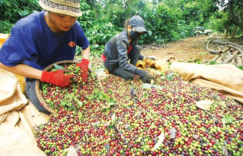 Corralling coffee production towards higher sustainability