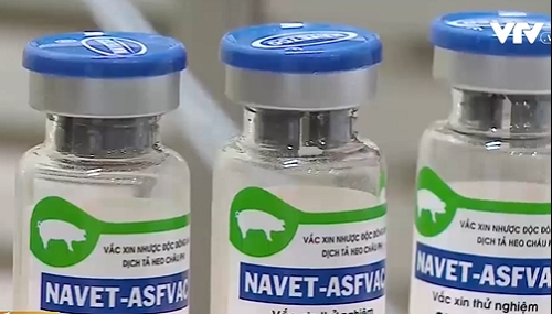 vietnam to become first country to produce vaccine for asf