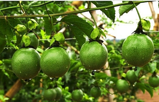 Thaco sets foot in agriculture