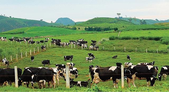 gtnfoods buys 295 million moc chau milk shares