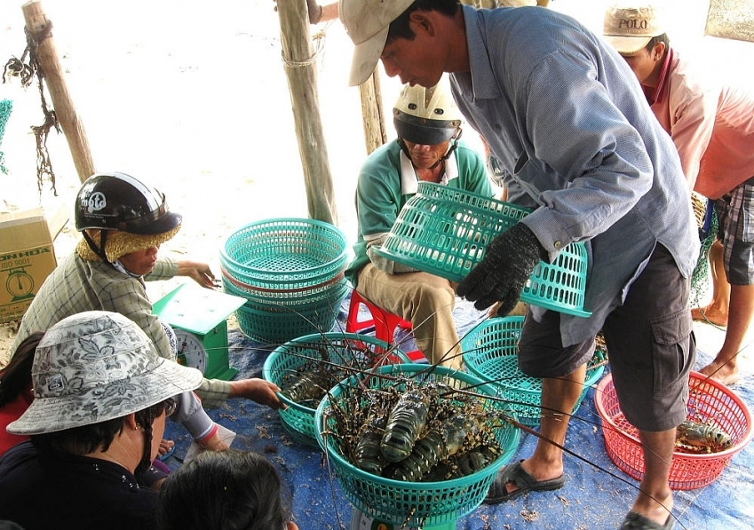 Phu Yen approves planning to expand key product chain