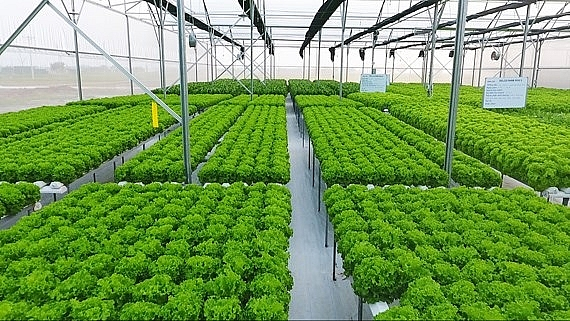 hanoi offers good opportunities for high tech agriculture for investors