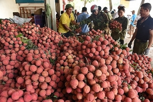Export of agricultural, forestry and fishery products brightening in the first half