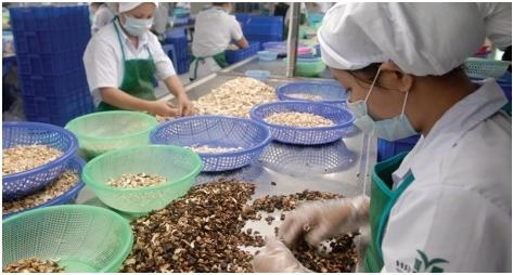vietnamese agricultural products win more export orders to europe