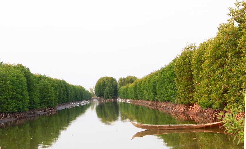 Generate 150ha mangrove forest in Mui Ca Mau National Park to fight climate change