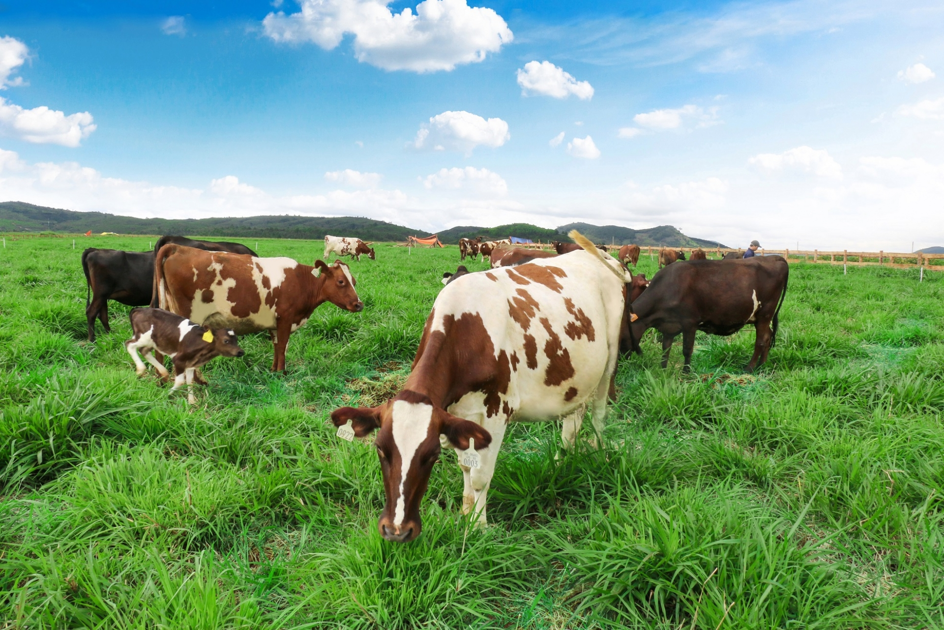 Sojitz and Vinamilk establish sales company for beef products