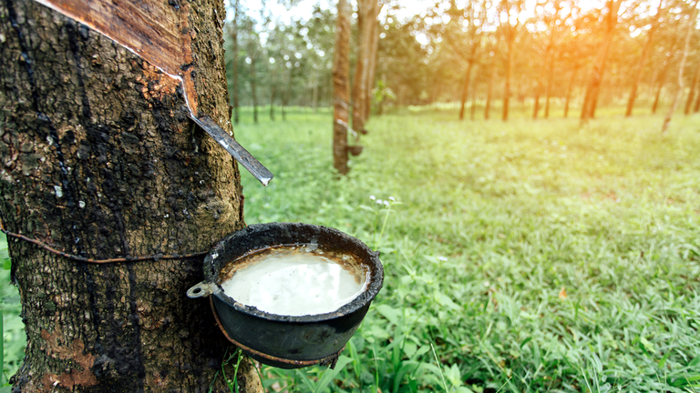 Rubber price and export rise in first two months