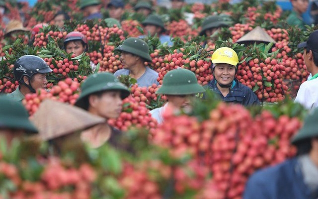 Hai Duong lychee to go on sale on e-commerce platforms