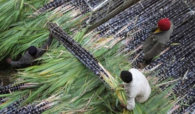 Sugarcane imported from Thailand slammed with 47.64 per cent tax for next five years