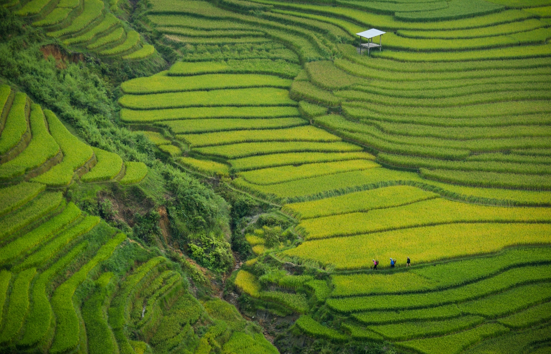 Developing a green bond market is crucial to Vietnam's sustainable development efforts