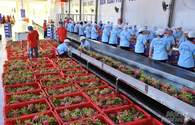 Export of vegetables and fruits declines in August