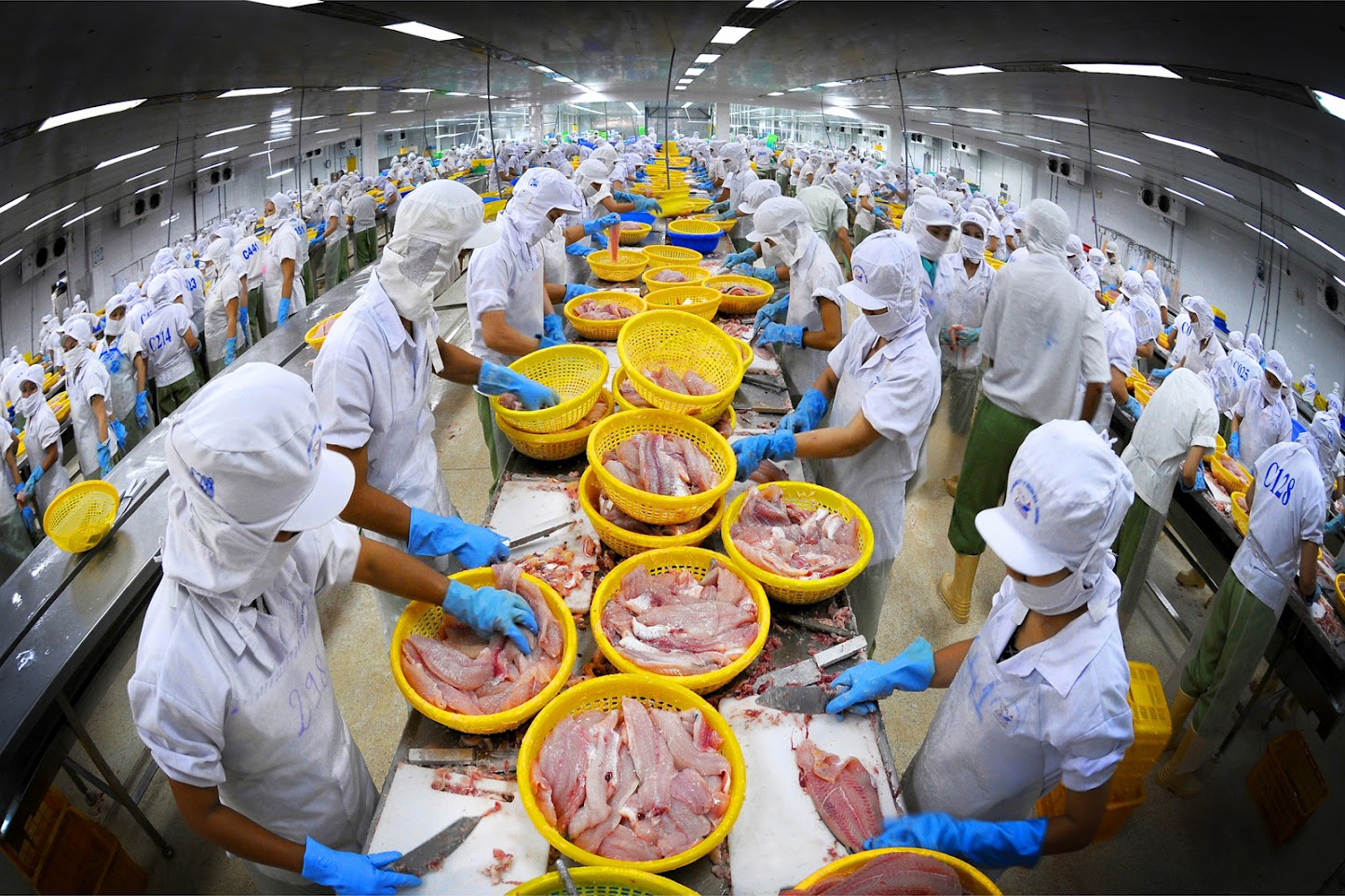 Seafood export showing falling sign in August